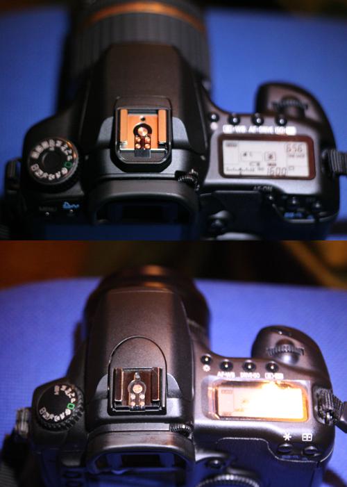 Canon EOS 40D von oben im Vergleich mit EOS 20D